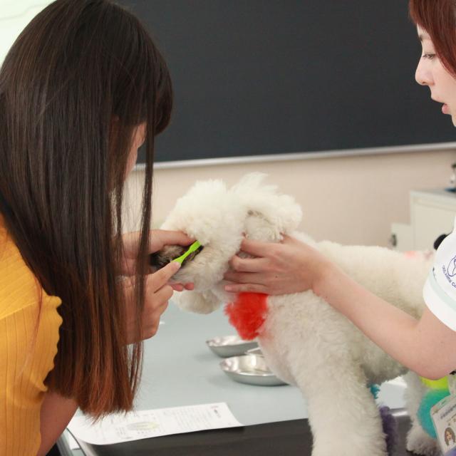 中央動物専門学校 H30 体験入学  日程一覧3