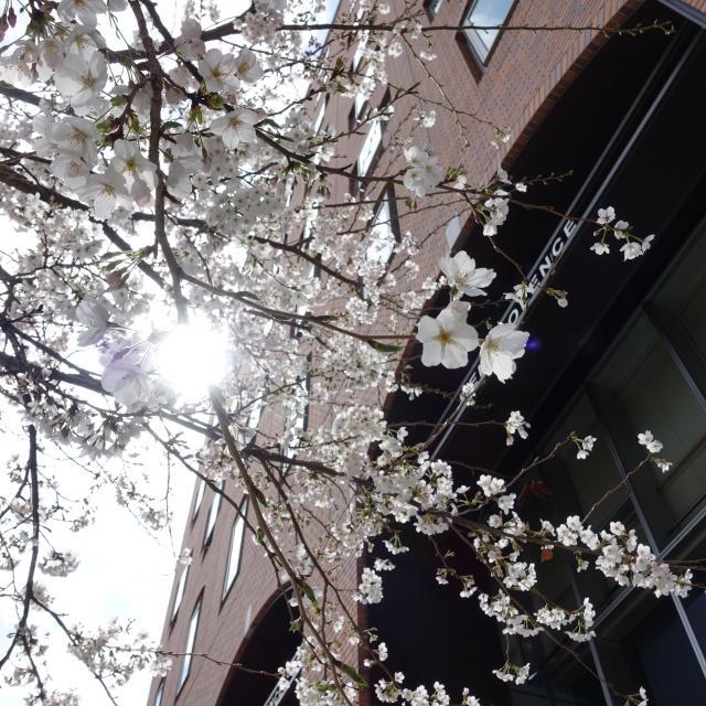 文京学院大学 3/23(Sat)、オープンキャンパス開催<本郷>1