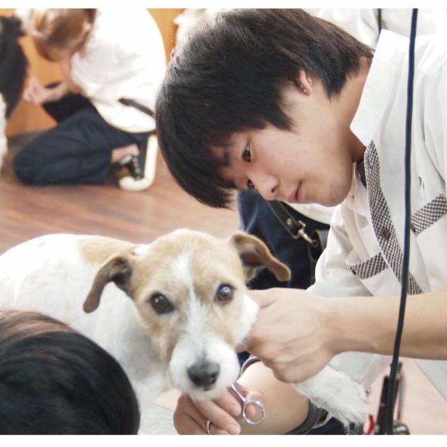 愛知ペット専門学校 トリマーのお仕事体験3