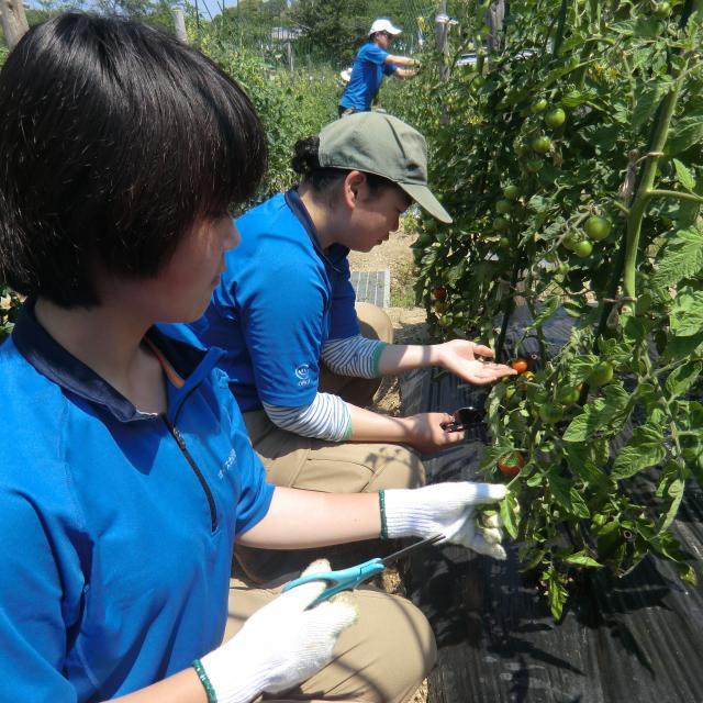 オイスカ開発教育専門学校 夏野菜の収穫体験♪2