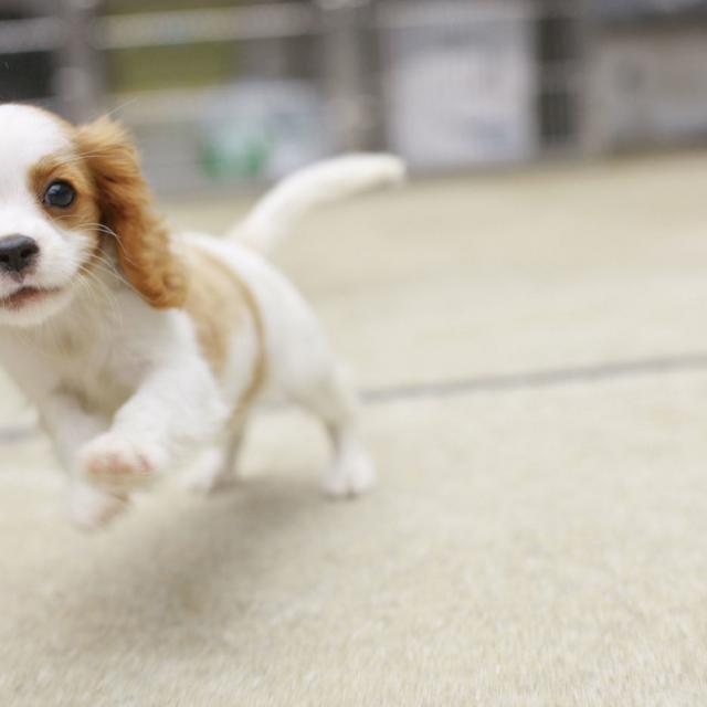 専門学校ビジョナリーアーツ 3/31(日) ・子犬のケアとトレーニング1