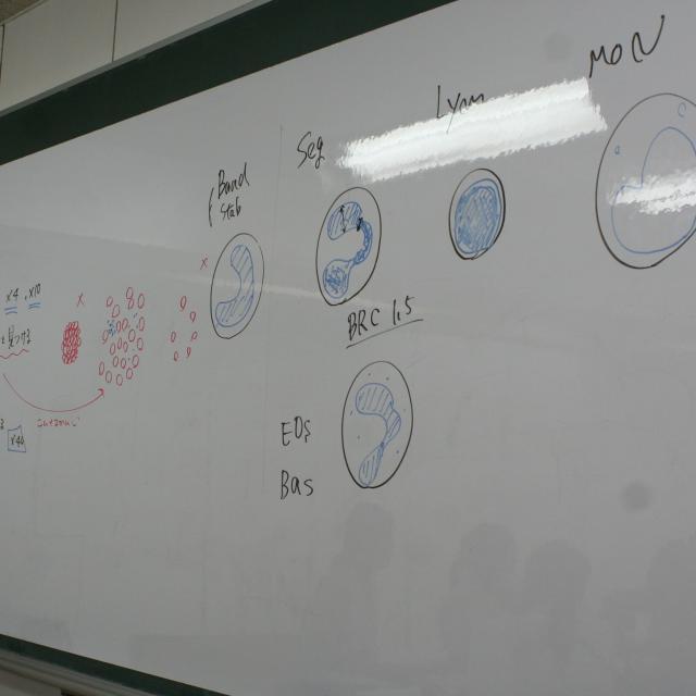 YIC京都ペット総合専門学校 動物看護師のお仕事~顕微鏡を使って検査をしてみよう~4