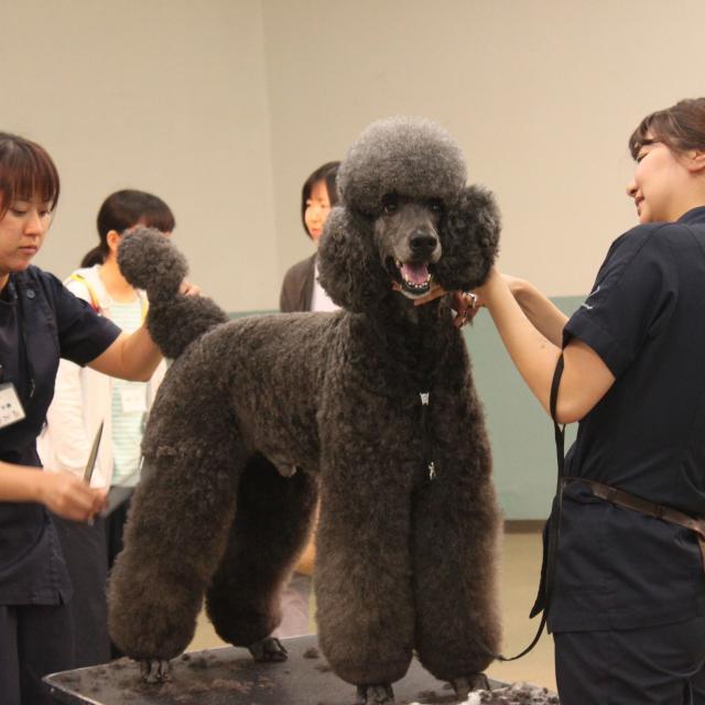 中央動物専門学校 新3年生対象体験入学1