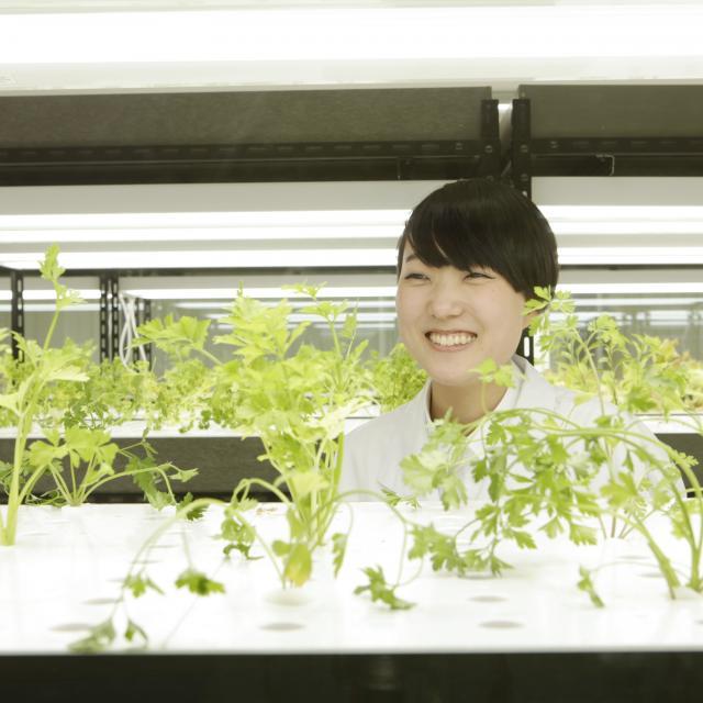 愛甲農業科学専門学校 水耕栽培を体験しよう!1
