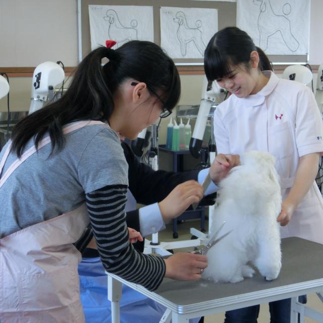 """京都動物専門学校 トリマーのお仕事がたっぷりできる""""トータルトリミング体験""""1"""