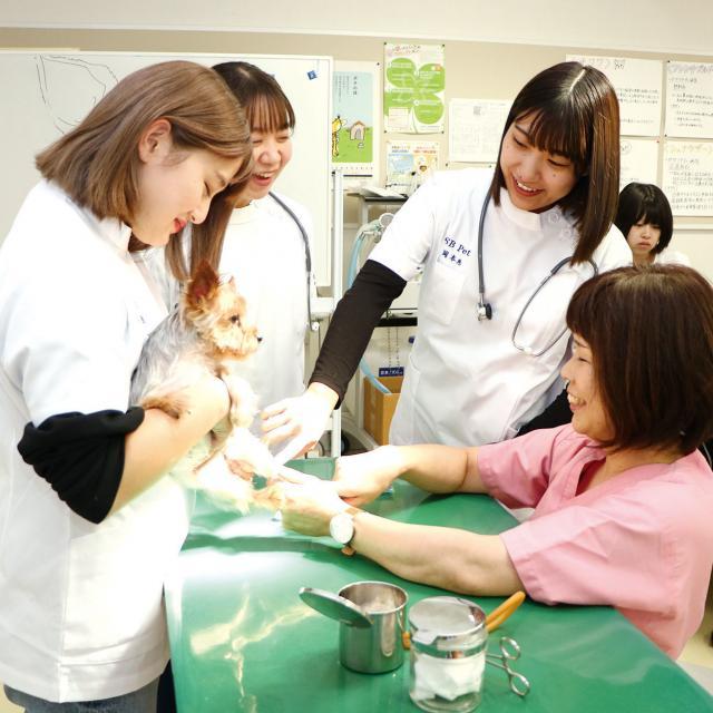 専門学校 九州スクール・オブ・ビジネス 9月体験入学 トリマー/動物看護/ドッグトレーナー2
