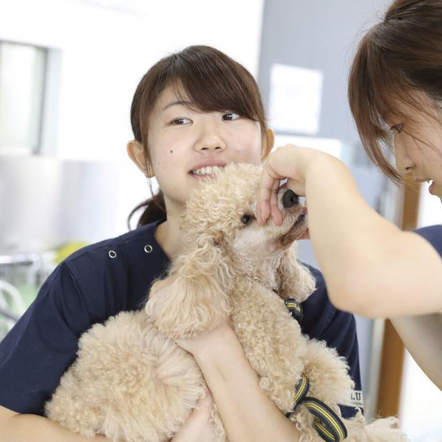 専門学校 福岡ビジョナリーアーツ 【ペット】動物看護師さんのお仕事体験1