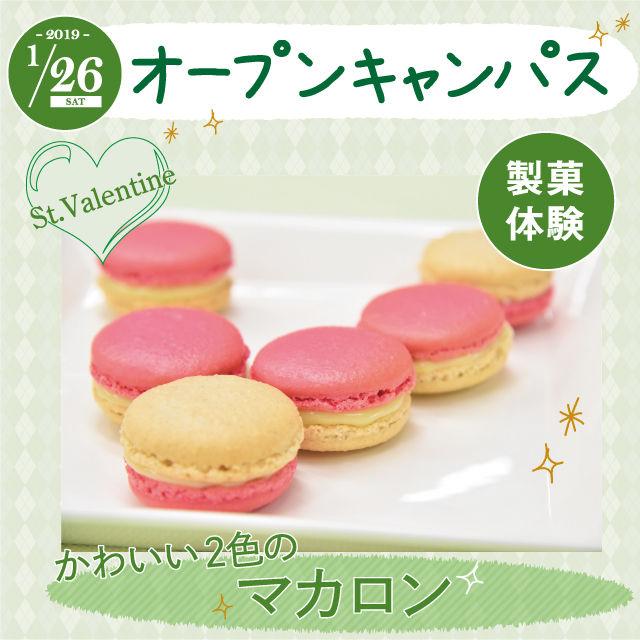 にいがた食育・保育専門学校えぷろん 製菓体験!!かわいい人気のパステルマカロン☆1