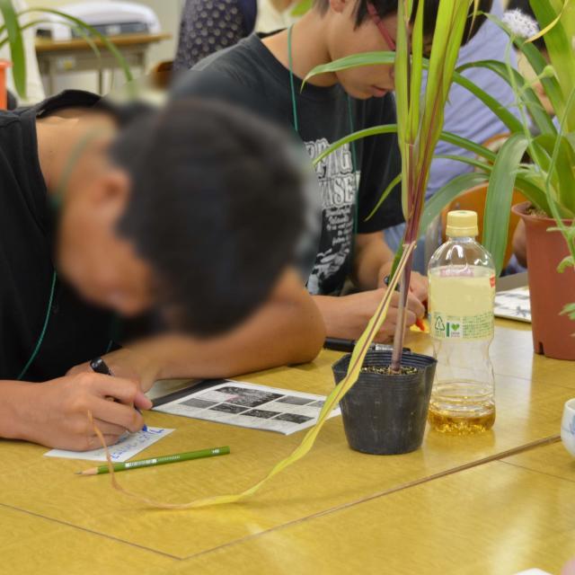 日本ガーデンデザイン専門学校 フラワーショップのディスプレイ方法を学ぶ3