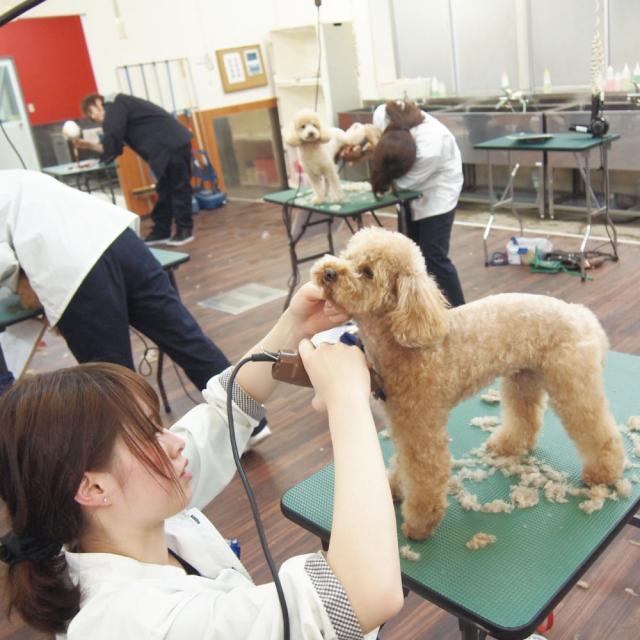 愛知ペット専門学校 トリマーのお仕事体験1