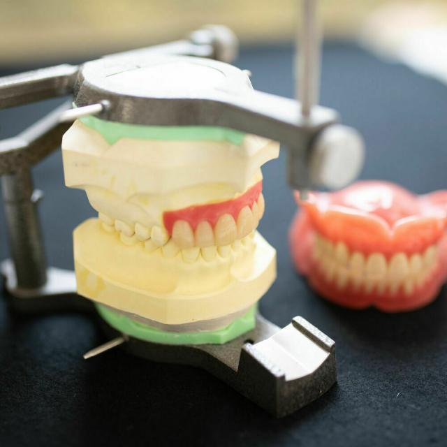 東邦歯科医療専門学校 歯科技工士学科 【本格体験】白い歯を並べてみよう!1