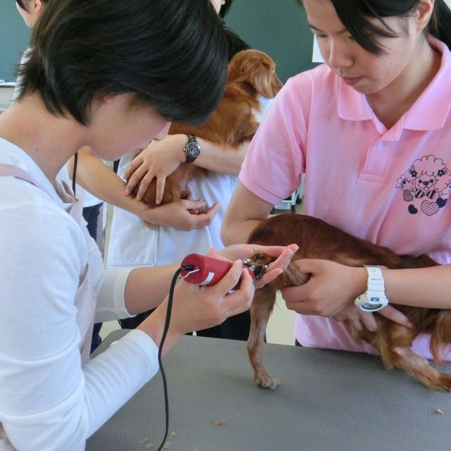 京都動物専門学校 春休みだ!!トリマーも動物看護師も両方体験しよう!2