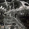 東京コミュニケーションアート専門学校 動物と化石から進化を学ぼう!