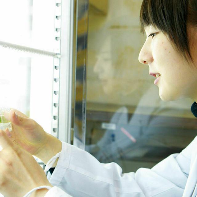 東京バイオテクノロジー専門学校 【植物バイオコース】オープンキャンパス:バイオのコース体験4