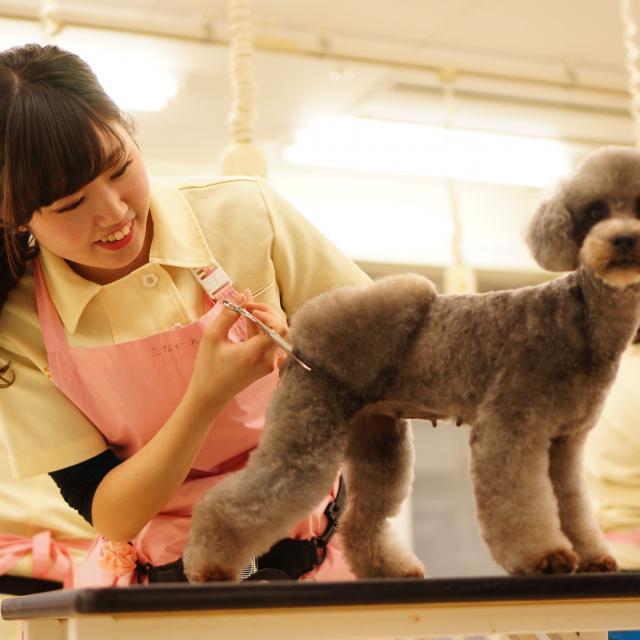 神戸動植物環境専門学校 【A:トリマー★体験】大好きなワンちゃんをキレイにかわいく♪2