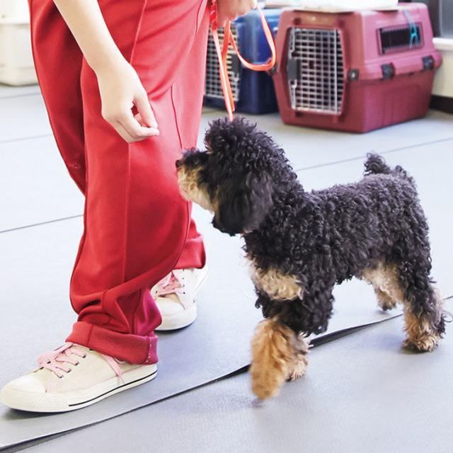 大阪ビジネスカレッジ専門学校 小型犬のトレーニング1