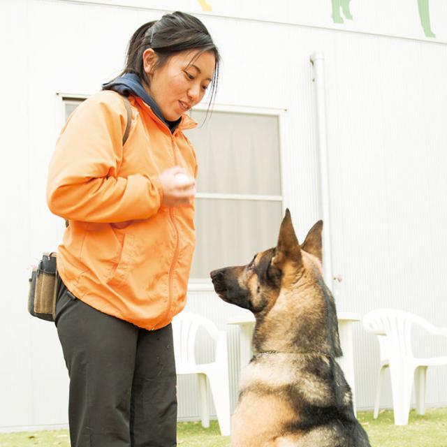 大阪ビジネスカレッジ専門学校 現役ドッグトレーナーに教わるワンちゃんのしつけ方1