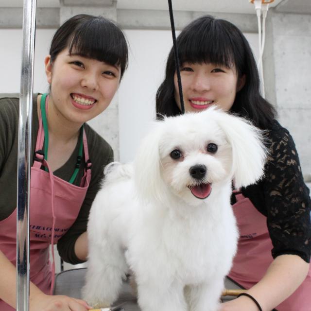 専門学校ちば愛犬動物フラワー学園 8/2(木)アニマルフェスタ4