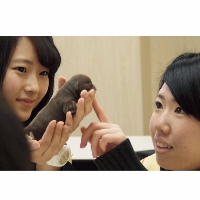 愛知ペット専門学校 担当犬体験(総合基礎編)3