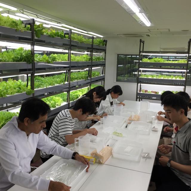 愛甲農業科学専門学校 水耕栽培を体験しよう!3