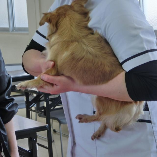 京都動物専門学校 ワンちゃんもリラックス~♪ドッグマッサージ&トリミング体験3