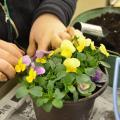 日本ガーデンデザイン専門学校 春が待ち遠しい 長~く楽しむ寄せ植え