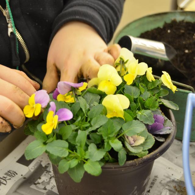 日本ガーデンデザイン専門学校 春が待ち遠しい 長~く楽しむ寄せ植え1