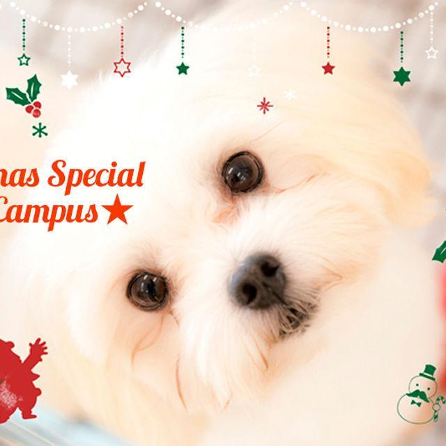 高崎動物専門学校 12/15(土)クリスマスSPオープンキャンパス開催!1
