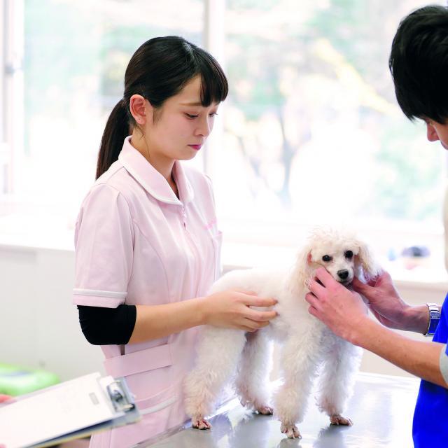 仙台総合ペット専門学校 動物衛生看護科 オープンキャンパス【送迎バス運行】1
