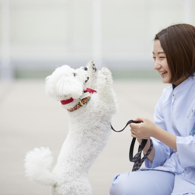 大阪ペピイ動物看護専門学校 8月イベント診察中の動物の抱え方を学ぼう!(1.2年生向け)1
