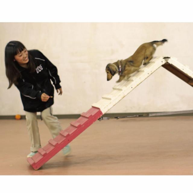 愛知ペット専門学校 ドッグトレーナー体験4