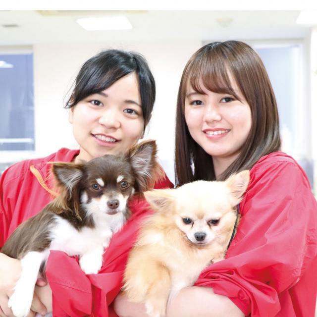 専門学校 九州スクール・オブ・ビジネス 10月の体験入学(トリマー/動物看護/ドッグトレーナー)1