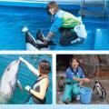 名古屋ECO動物海洋専門学校 【ドルフィントレーナー】