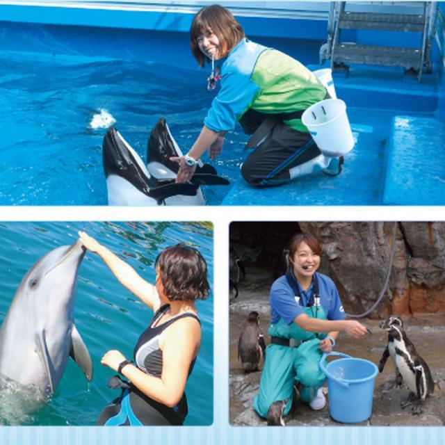 名古屋ECO動物海洋専門学校 【ドルフィントレーナー】海洋系希望者必見!1