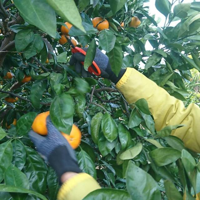 オイスカ開発教育専門学校 冬野菜、収穫してみませんか?12月のオープンキャンパス4
