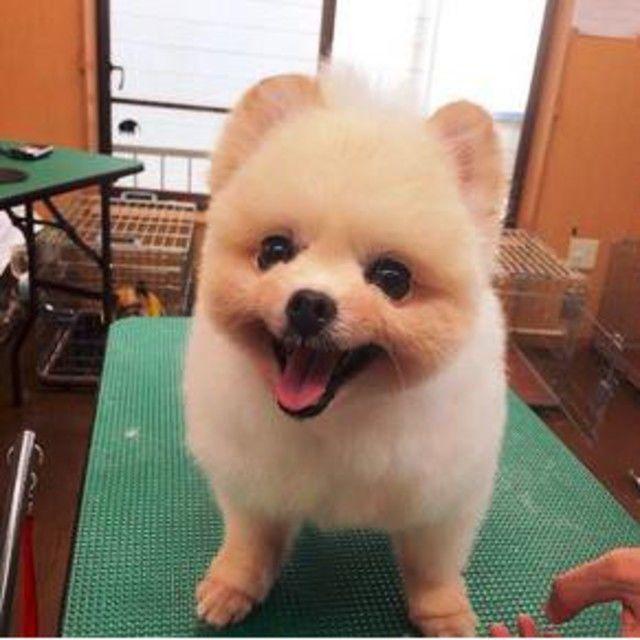 わんちゃんの栄養状態を調べよう☆学校見学会