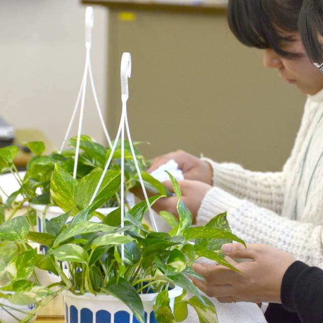 日本ガーデンデザイン専門学校 お部屋で楽しもう!インドアグリーンの選び方と育て方2