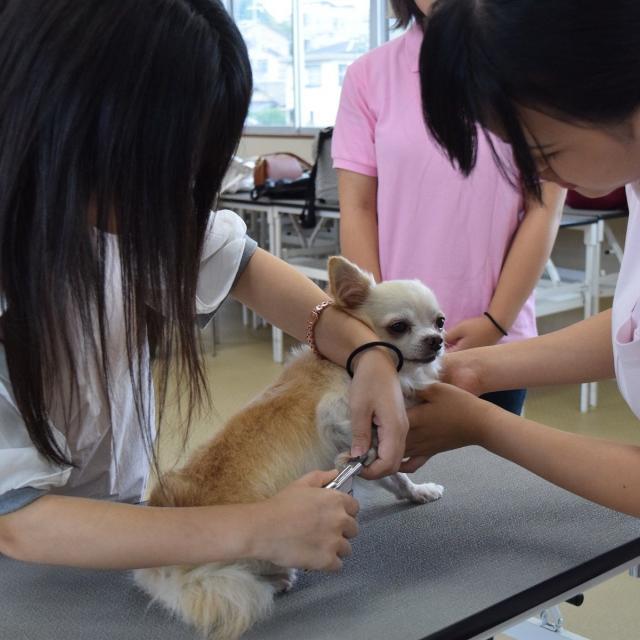 京都動物専門学校 春休みだ!!トリマーも動物看護師も両方体験しよう!4