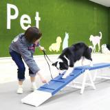 【動物看護】トレーナー&看護体験の詳細