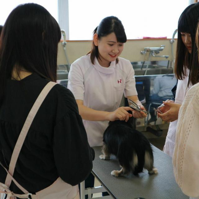 京都動物専門学校 アロママッサージ&トリミング体験2