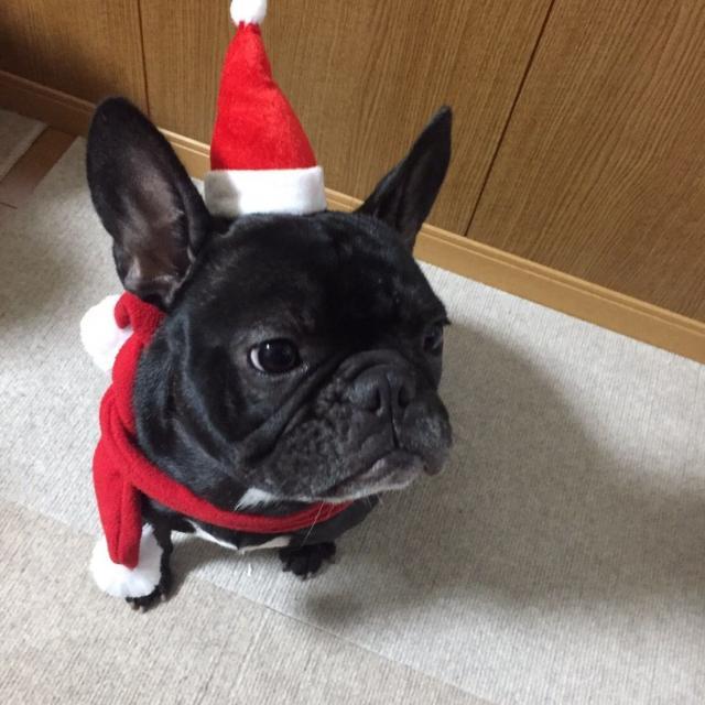 YIC京都ペット総合専門学校 犬種学体験+わんわんXmasパーティ☆3