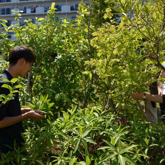 日本ガーデンデザイン専門学校 在校生が教える 庭の樹木の剪定3