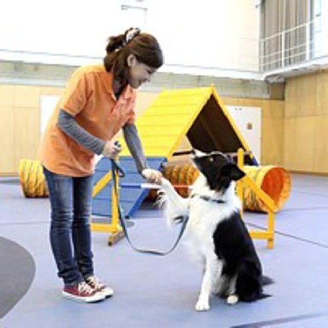 【B:ドッグトレーナー★体験】おすわり!まて!障害物競争も♪