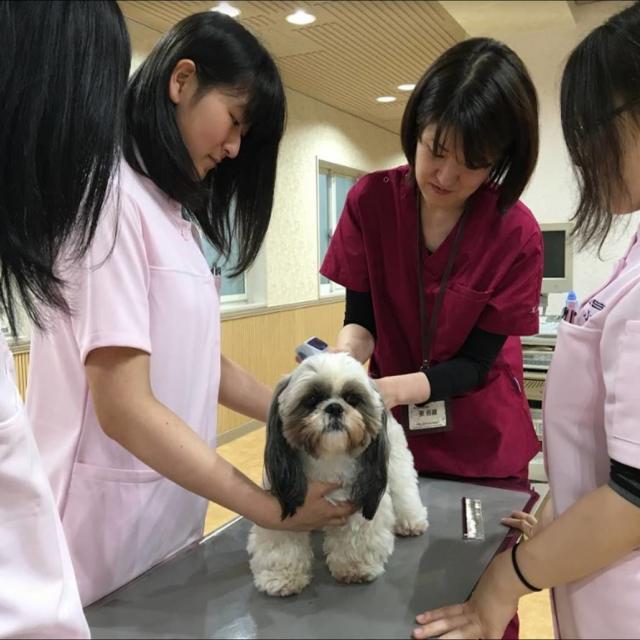 ☆動物看護専攻☆ 動物病院のお仕事を体験してみよう!