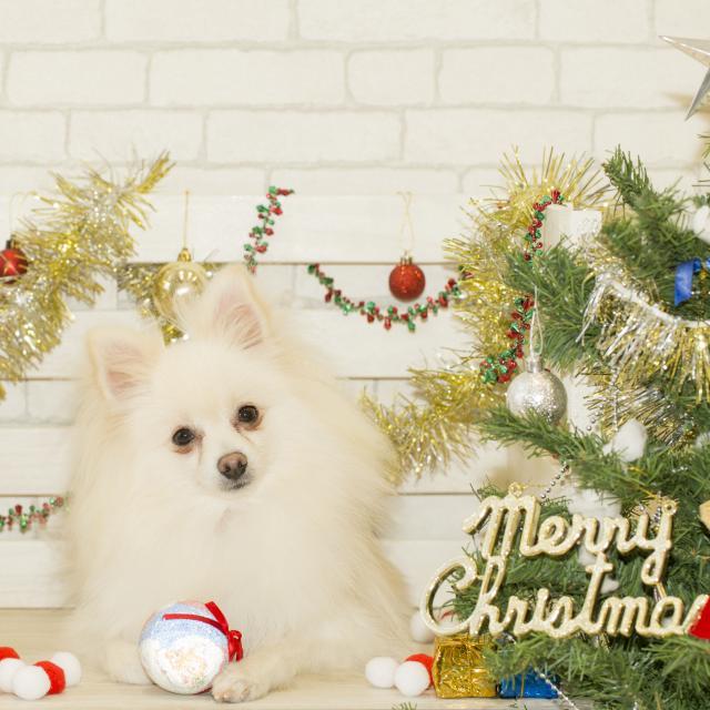 北海道どうぶつ・医療専門学校 ☆スペシャルイベント☆わんこと一緒にクリスマスパーティ♪♪4