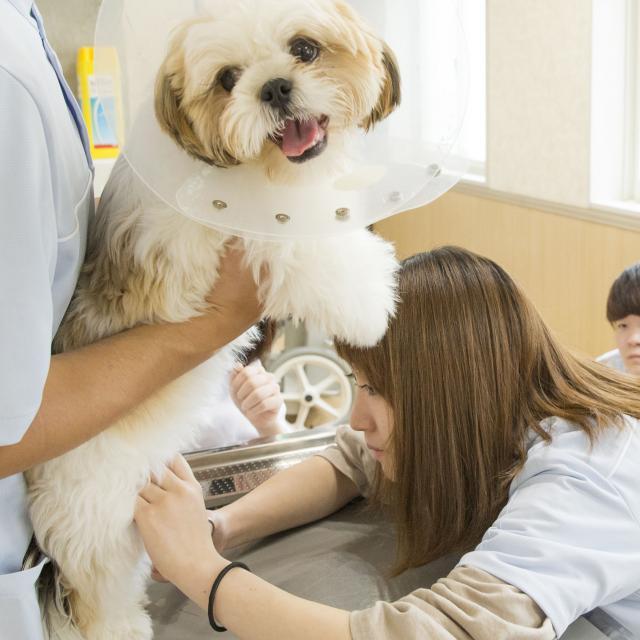 北海道どうぶつ・医療専門学校 ☆動物看護専攻☆ 動物病院のお仕事を体験してみよう!4