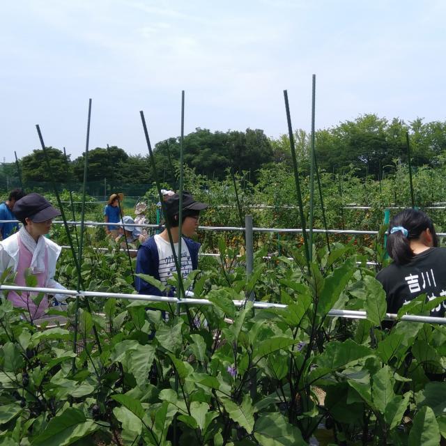 オイスカ開発教育専門学校 夏野菜の収穫体験♪4