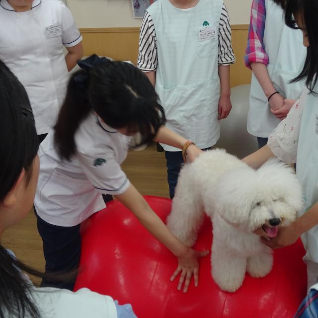 国際動物専門学校 学科別体験入学1