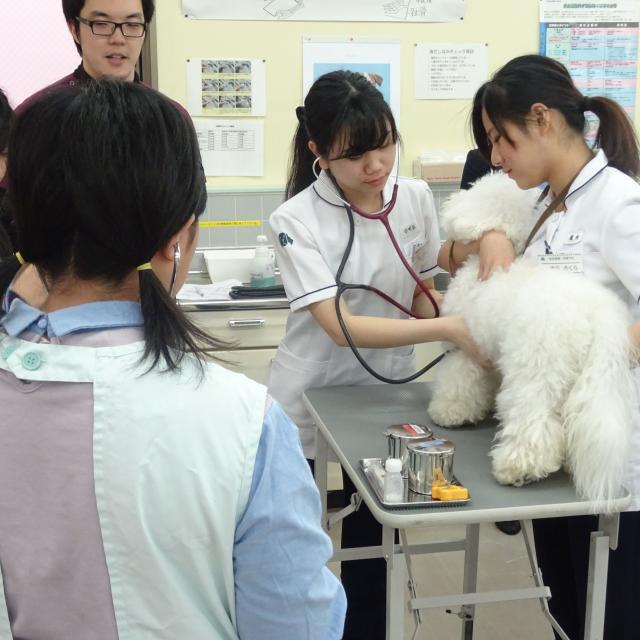 国際動物専門学校 学科別体験入学2