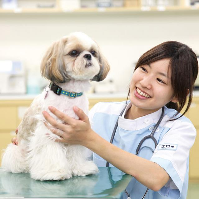 仙台ECO動物海洋専門学校 動物看護師のお仕事体験1
